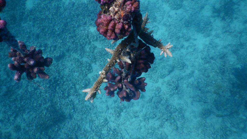 Makaira-Resort-Coral-Reef-125.jpg