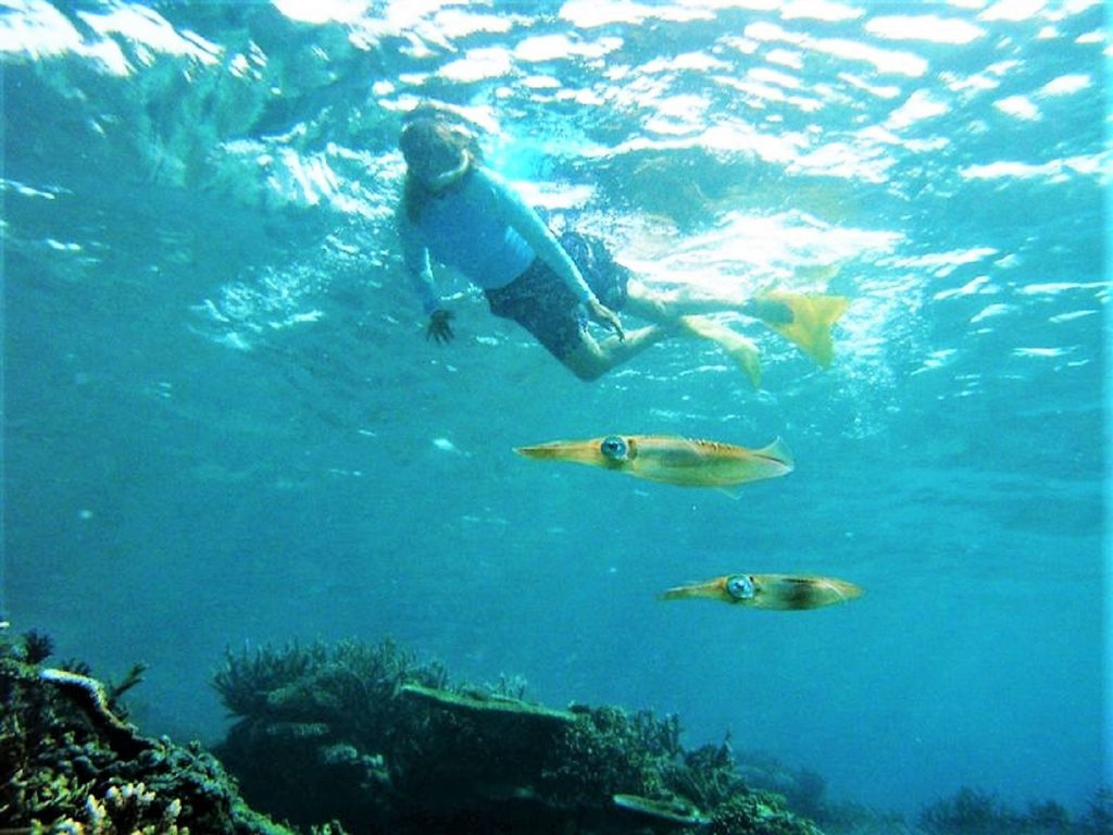 Snorkeling the Reef at Makaira Resort Taveuni (2)