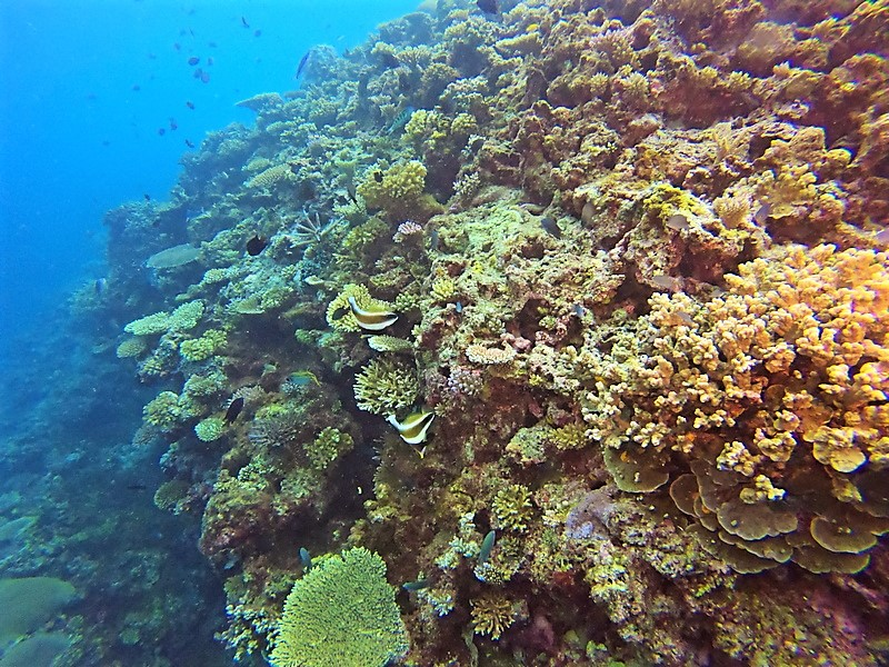 Snorkeling-the-Reef-at-Makaira-Resort-Taveuni-5.jpg