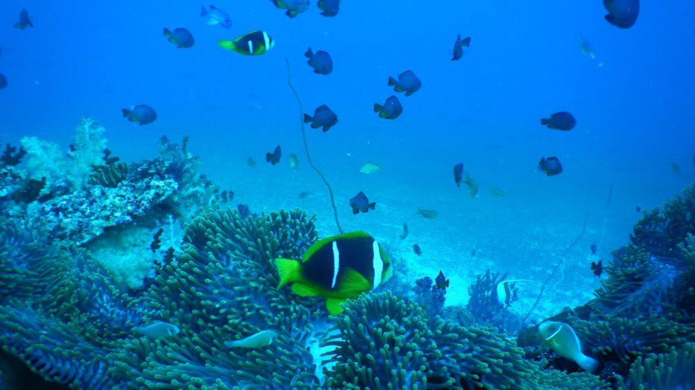 Makaira Resort Diving Rainbow Reef (4)