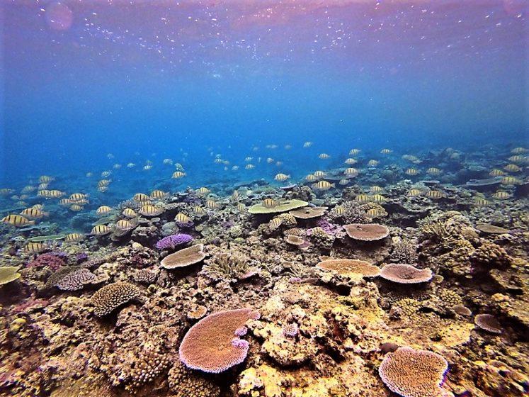 Snorkeling the Reef at Makaira Taveuni (1)