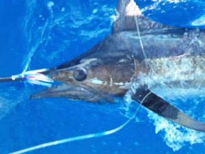Deep Sea Fishing with Makaira Resort, Taveuni