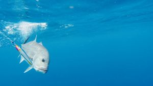 More Deep Sea Fishing with Makaira Resort, Taveuni