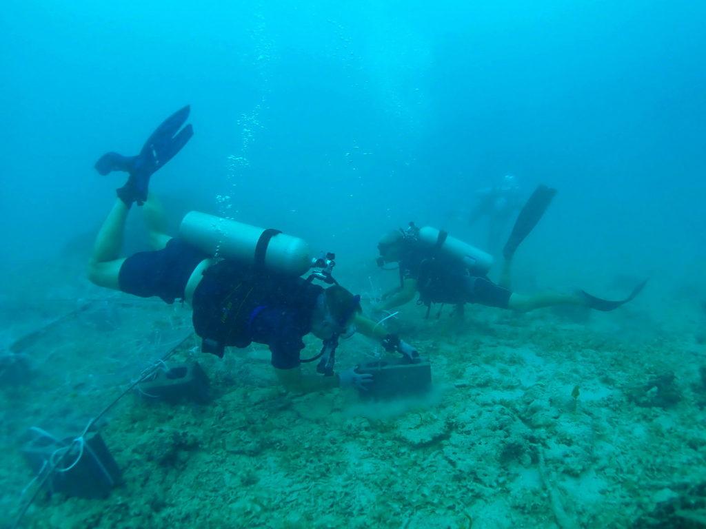 Snorkeling Taveuni Makaira Resort Fiji (22)