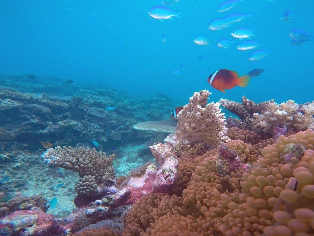 Snorkeling Taveuni Makaira Resort Fiji (24)