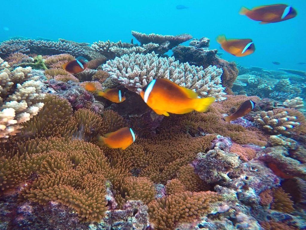Snorkeling Taveuni Makaira Resort Fiji (25)