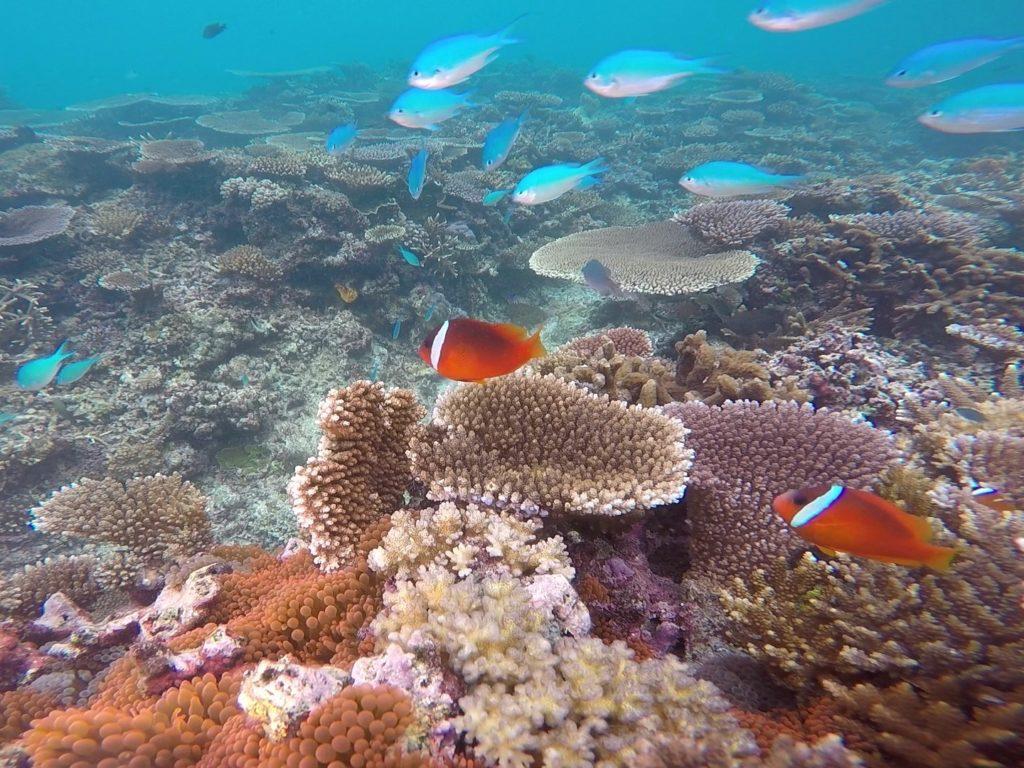 Snorkeling Taveuni Makaira Resort Fiji (26)