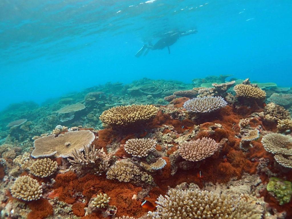 Snorkeling Taveuni Makaira Resort Fiji (27)
