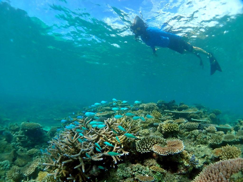 Snorkeling Taveuni Makaira Resort Fiji (5)