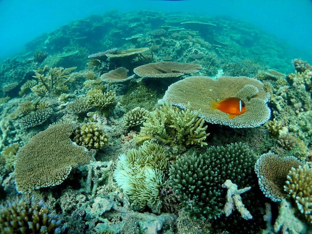 Snorkeling Taveuni Makaira Resort Fiji (6)
