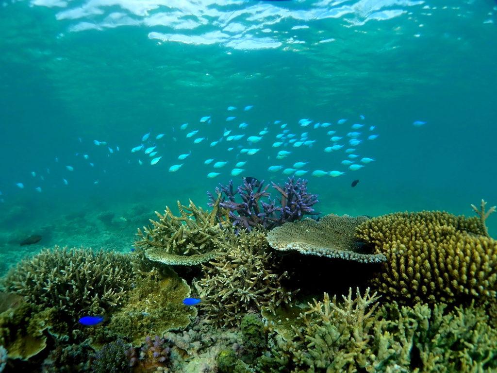 Snorkeling Taveuni Makaira Resort Fiji (9)